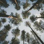 arbres